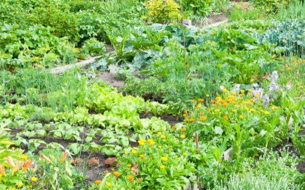 Współrzędna uprawa warzyw: jakie warzywa sadzić obok siebie